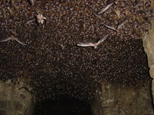 Bats at Golconda Fort — Bill Thoet фото 2