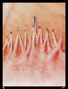 © Andy Fairhurst фото 1