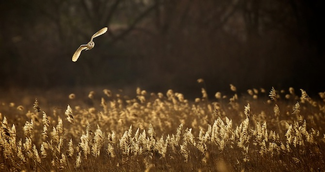 Hunting at Dusk — Mark Bridger
