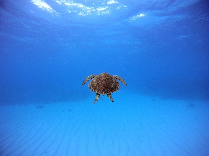 Swimming with a Turtle — John Peterson