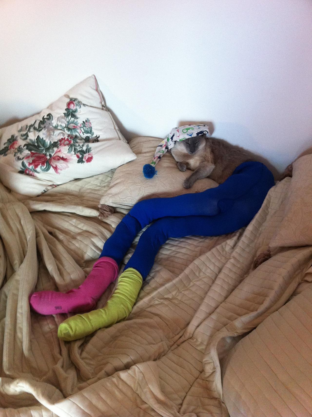 Фото котов в колготки