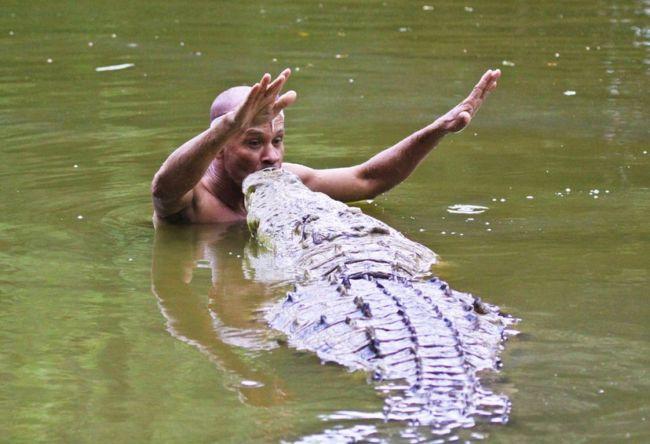 крокодил фото дома