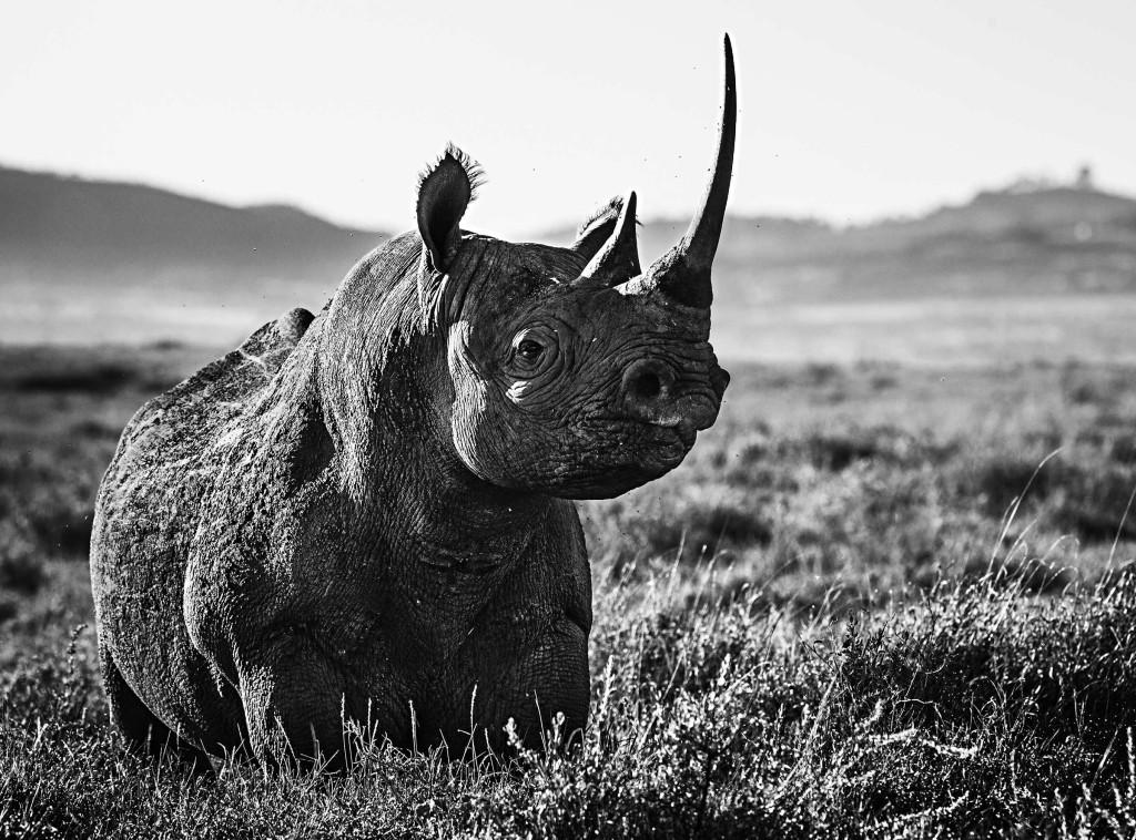 лучшие черно белые фото животных газовое отопление