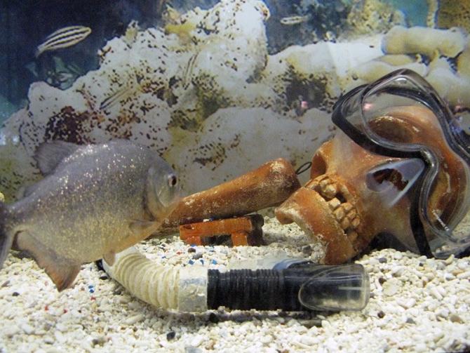фото рыб опасных