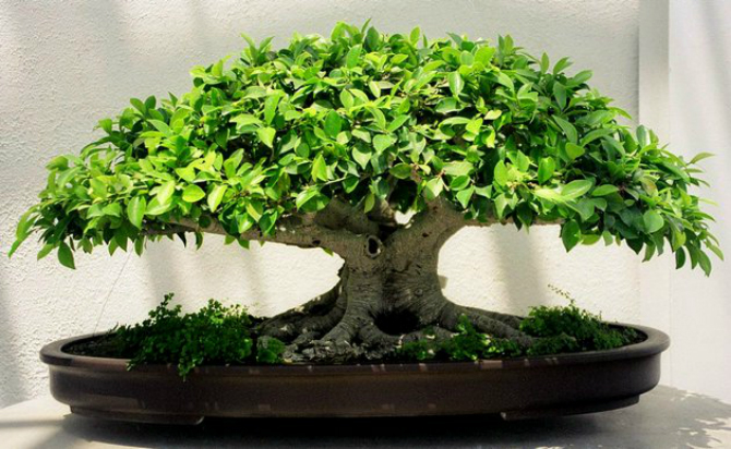 растения домашние фото