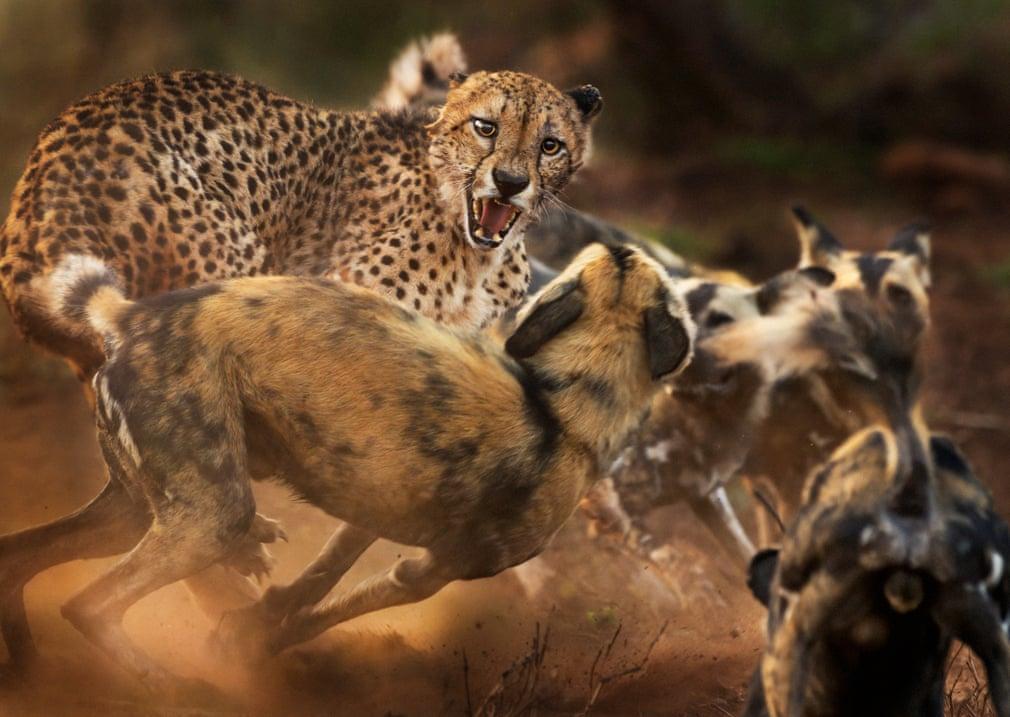 Десять высоко оценённых фотографий, претендующих на звание «Лучшего снимка дикой природы»