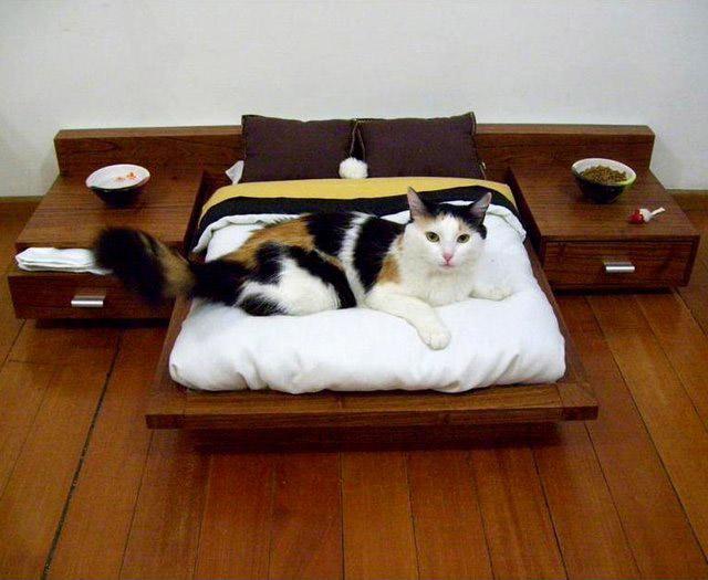 Кроватки для кошек своими