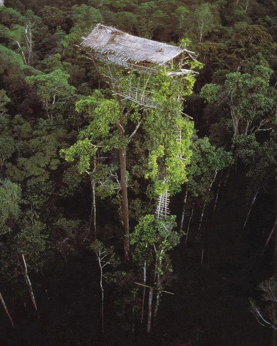 Племя, которое живет...на деревьях