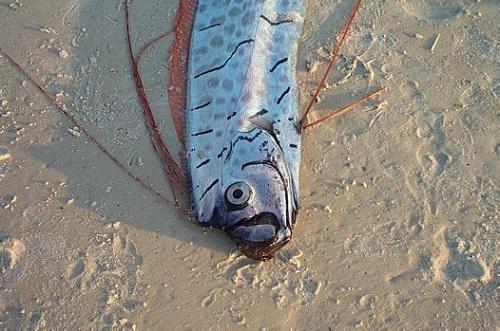 Найрідкісніша і незвичайна риба у світі