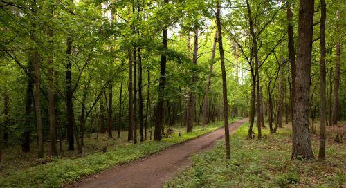 Прогулянки на свіжому повітрі допомагають розвивати мозок