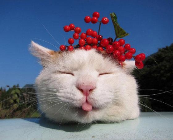 3 самые модные породы кошек на данный момент
