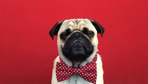 Норм — звезда Инстаграма, или что значит идеальная дрессировка собаки