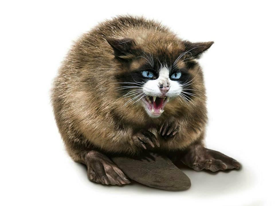 20 гибридных животных или когда photoshop