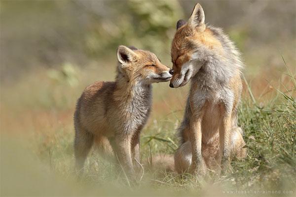 Ми ми ми любовь среди животных