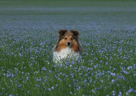 самые умные собаки фото и названия