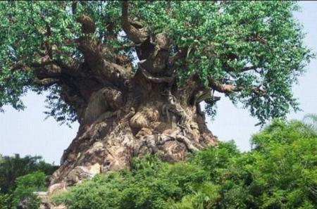дерево дуб картинках