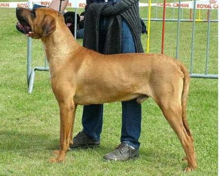 Список бойцовых пород собак — Википедия