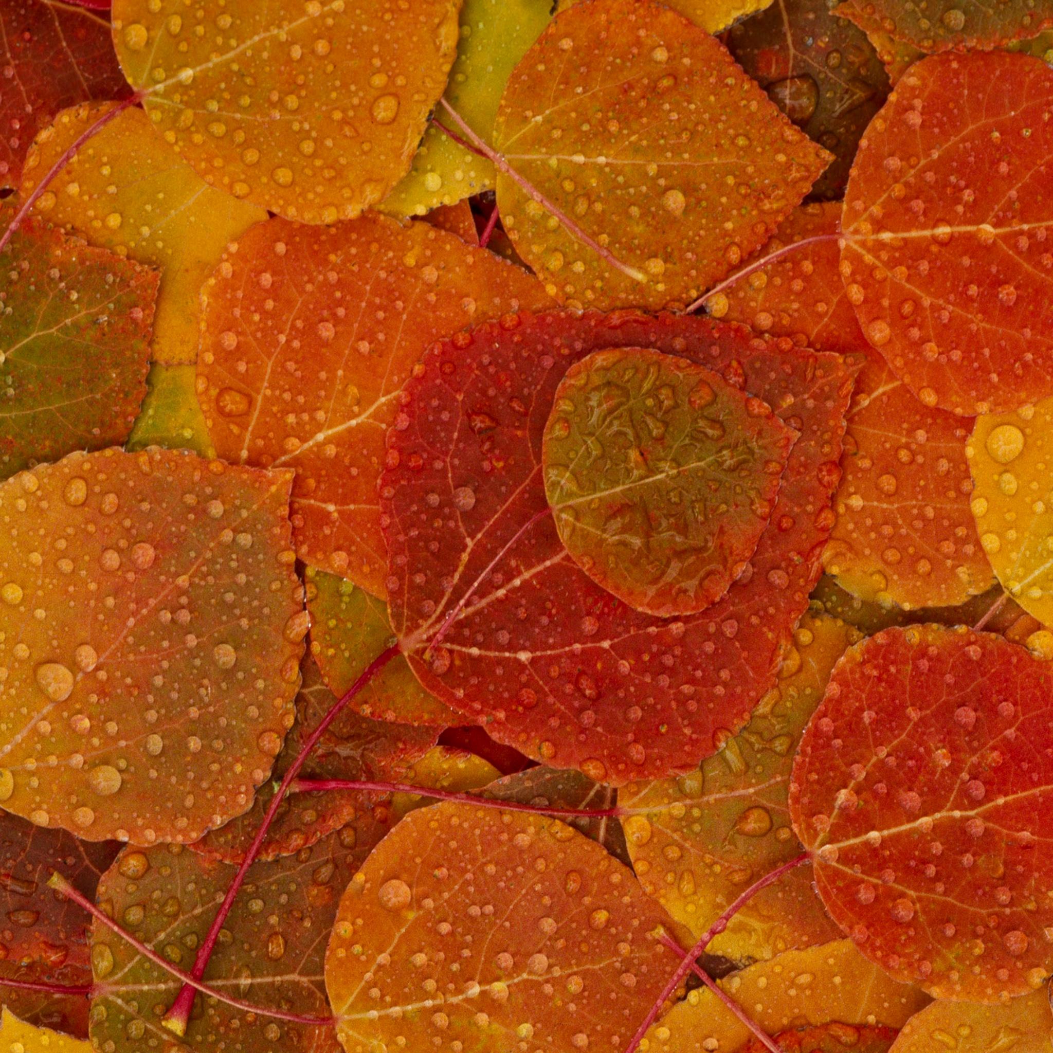 Осенние обои для iPad: xage.ru/osennie-oboi-dlja-ipad